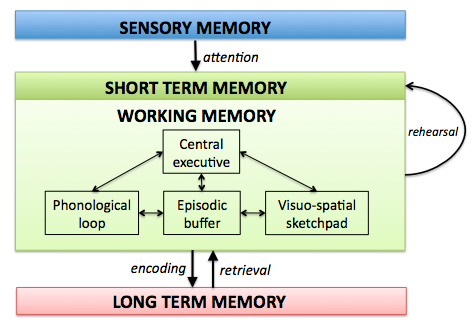 essay about short term memory Psychology short term and long term memory studies short term study i have researched a study into short term memory and found the following information.